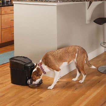 alimentador automático para perros y mascotas
